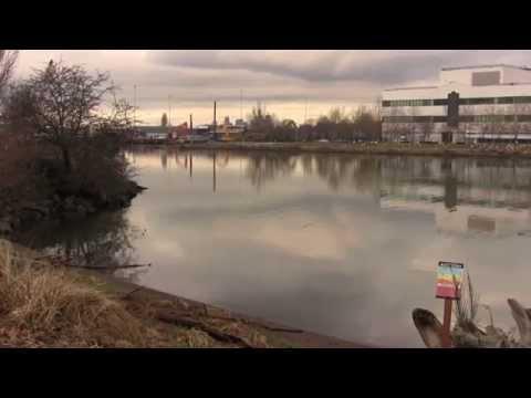 """Cư dân gốc Việt vùng South Park tiếp tay ủng hộ việc:  """"nạo vét""""- làm sạch dòng sông Duwamish hiện bị ô nhiễm nặng…"""